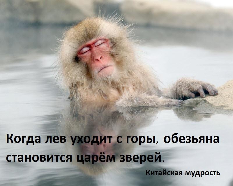 makaka_rus